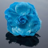 Pretty Artificial Silk/Lace Flowers & Feathers (042052124)